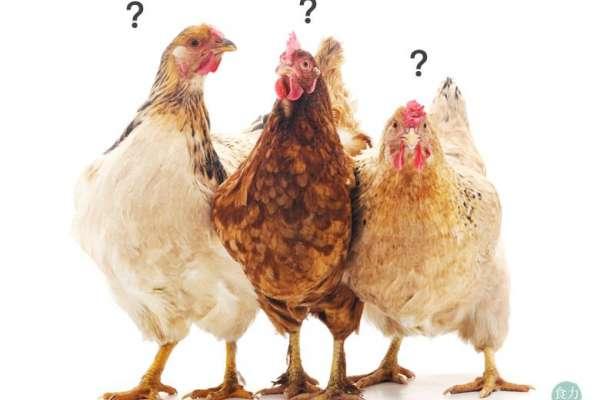 好雞精不喝嗎?喝雞精就是好?專業醫師警告:這四種人不能喝!