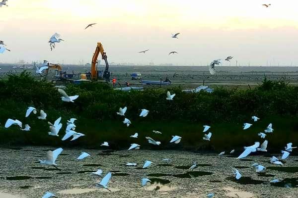 台大醫貼「怪手與候鳥照」稱光電將毀濕地 環團反打臉:工程讓鳥類數量不減反增