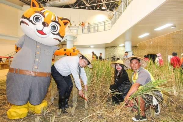 台中花博樂農館稻田收成 遊客下田體驗農民豐收喜悅