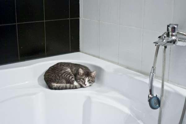 澡該早上洗還晚上洗?一天洗幾次最好?專家從「陰陽規律」角度告訴你答案