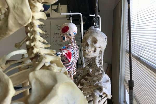記得校園鬼故事中「會走動的人體模型」嗎?日本模型很多竟是真人骨!有些還來自死刑犯