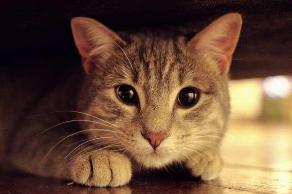 上海人瘋「貓咖」!90人民幣不限時、和貓玩個夠!但貓奴商機大爆發,卻讓一群貓咪陷噩夢