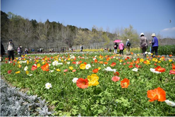 臺大梅峰農場春之饗宴 25、26日入場免費送樹苗