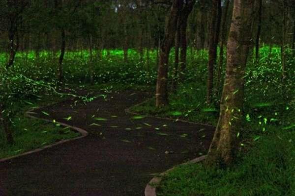花蓮和風日式木建築群 戀戀螢火微光森林