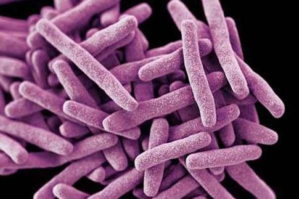「各種藥物治療無效」「致死率極高」「公衛新威脅」……關於「超級真菌」的真相
