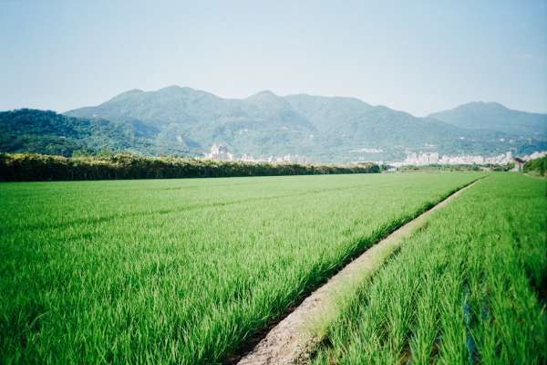 來台灣種田,才知「活著」多好!她離開中國在宜蘭「重生」,看見寶島最可貴風景