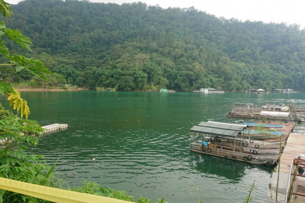日月潭南邊湖水色呈異常黃綠色 民眾向投縣檢舉
