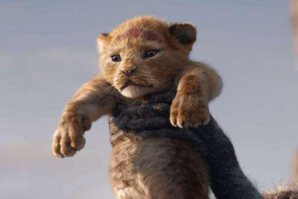 還原度超高!《獅子王》有什麼好看?影評:經典重看,終於懂得那些小時候難以理解的事…