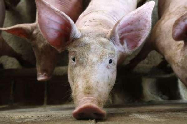 金門、新竹查獲大量中國肉製品零食!刑大呼籲:擅自輸入疫區肉製品,恐面臨這嚴重後果