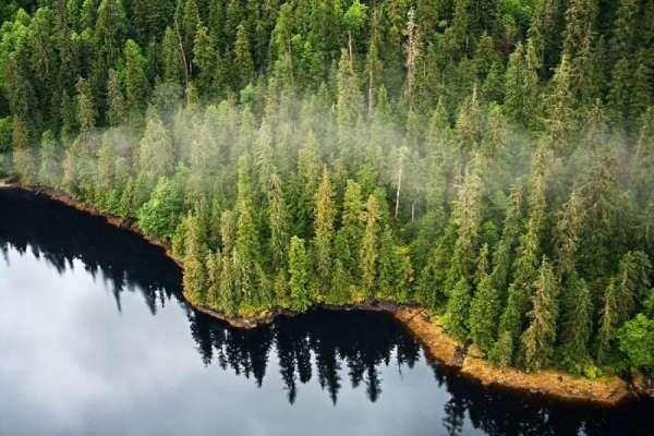 「美國亞馬遜」有危機!川普擬解除全美最大國家森林砍伐限制 阿拉斯加人怒吼:別對我們這麼做!