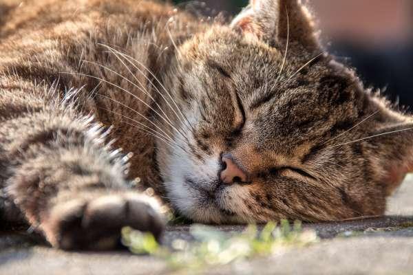 下次就這麼跟老闆說!瑞士研究:偶爾睡午覺有益身「心」,降低心血管疾病風險