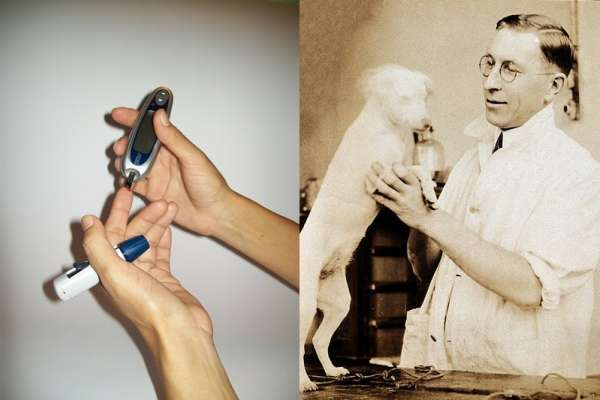 糖尿病患救命丹「胰島素」是怎麼被發現的?他犧牲無數狗狗性命,終於研究出萃取的關鍵…