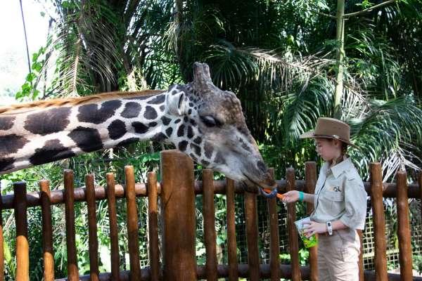 這世界需要更多的動物園嗎?「澳洲最大」雪梨動物園開幕,激起各方辯論