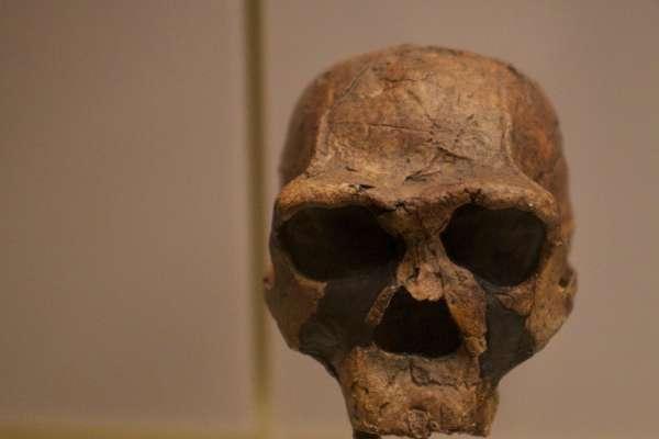 人類演化史大發現!「直立人」在地球生存逾180萬年 印尼爪哇是最後滅絕地點