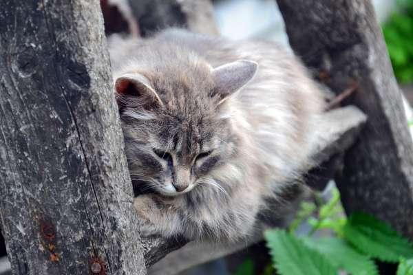 喵星人看似很跩,其實很愛你!印尼一名飼主過世,他的貓竟哀傷過度差點脫水死亡