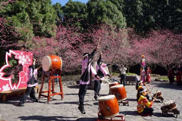 南投遊樂區櫻花盛開 櫻花祭第20回紀念系列活動開始