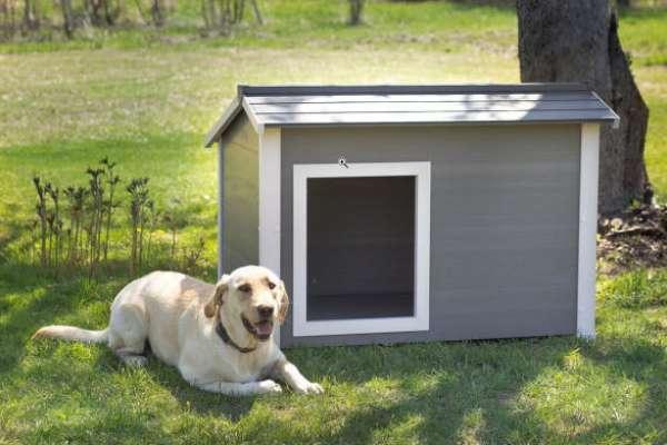 真的有社區不准養狗!想帶毛小孩搬新家,記得先確認這件事