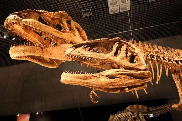 恐龍是恆溫動物?最新研究:恐龍有鮮艷羽毛、體溫略高於環境溫度