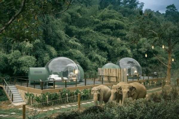 觀光不必虐象的最佳解!泰國這間酒店與基金會合作拯救受難大象,營造人象和諧的居住環境