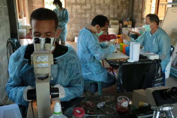 武漢肺炎是人工製造還是動物突變?專家追蹤病毒起源,驚見人類「自取滅亡」的未來