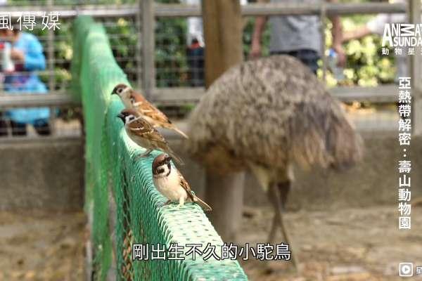 動物頻道能一本正經胡說八道?旁白語氣神模仿!以假亂真令人會心一笑【影音】