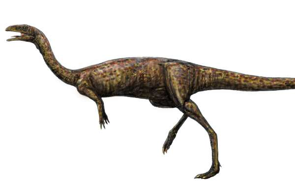 1億多年前的「無齒恐龍」!長脖子的牠是暴龍近親,成年後可能吃素 澳洲首度挖出稀有「輕巧龍」化石