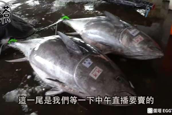 狂嗑萬元東港黑鮪魚奢華早餐!油花滿布滿嘴幸福,直擊漁市競標幕後有錢竟買不到【影音】