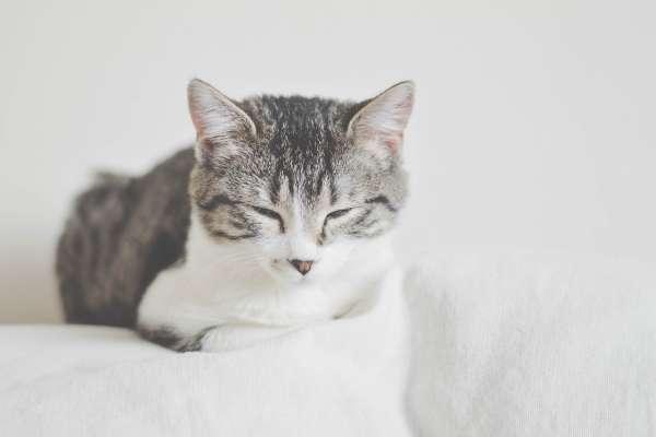 玉女靈貓:《讀書與生活》選摘(1)