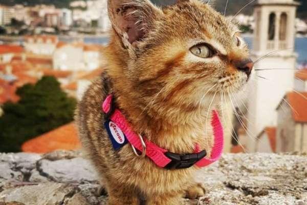 「她教我放慢腳步、享受生活」搭順風車環遊世界的神奇貓咪娜拉