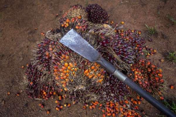 你的美妝美食.他的血淚童年3》綠色認證成為掩蓋真相工具?!永續棕櫚油來源遭質疑