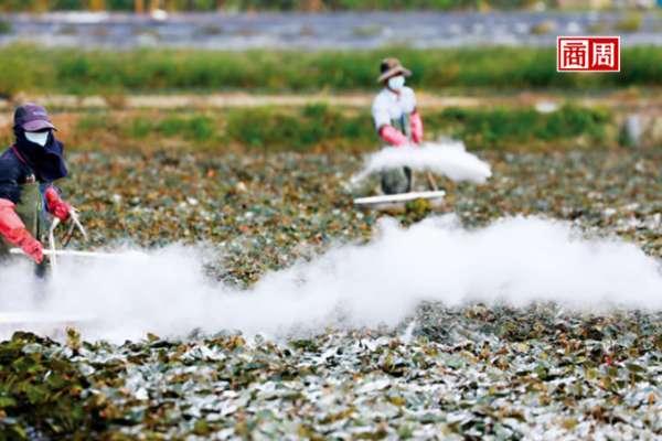 菱角田中的生態浩劫...他們為了救保育鳥類挨罵、甚至賠命!