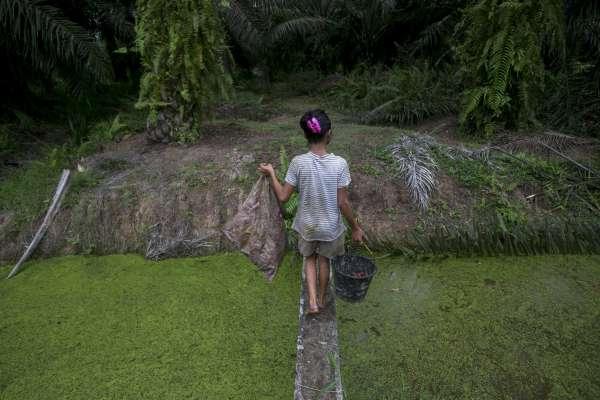 你的美妝美食.他的血淚童年1》世襲貧窮、被迫輟學 棕櫚油產業埋葬無數孩子的未來