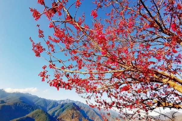春節出遊首選 梨山獅頭山、八卦山賞花祈福之旅