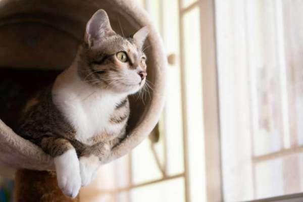 貓奴必看》貓咪心情好不好,看尾巴就知道!獸醫師教你這樣判斷:這時千萬別輕易靠近