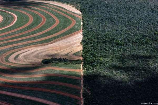 世界自然基金會:歐盟是全球破壞森林的第二大推手,中國位居第一