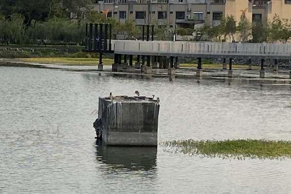 中市建設局引回收水穩定水位 守護星泉湖生態