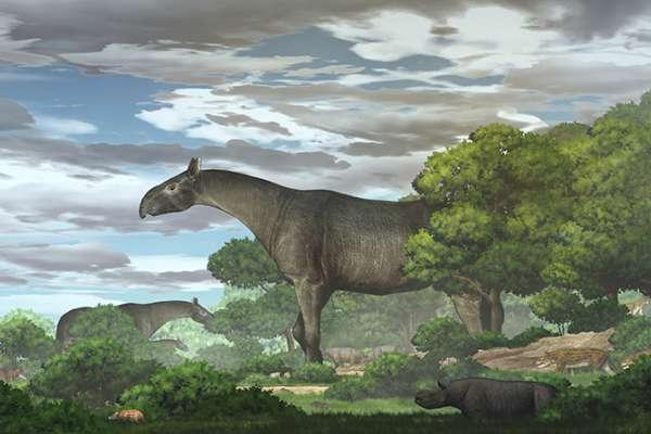 比長頸鹿還高的巨大犀牛!中國出土2600萬年前化石 地表最大哺乳動物揭秘