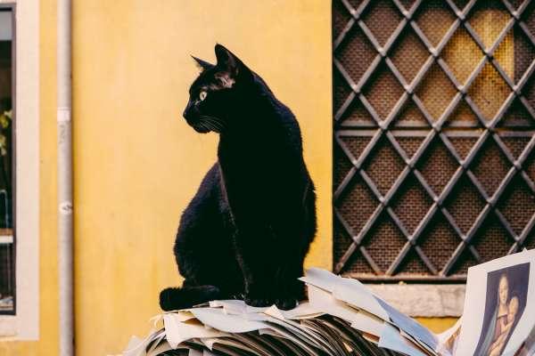 打破鏡子會倒楣七年、看見黑貓會帶來好運…揭秘英國13個特殊迷信,讓台灣人直呼超荒謬