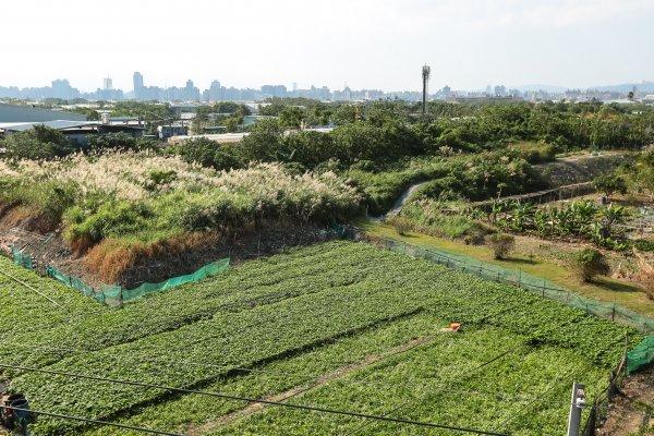 雲嘉缺肥料造成搶購 農糧署:台肥全力生產並持續進口