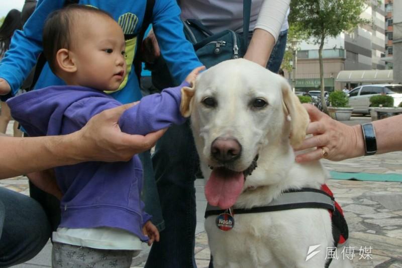 網友在臉書PO文表示,有公家機關的志工阻擋導盲犬入內,原因竟是「怕讓民眾觀感不佳」。此圖非當事犬、人。(資料照,葉信菉攝)