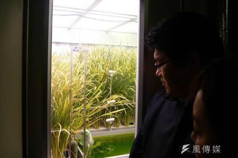 水稻生產植物工廠(作者提供)