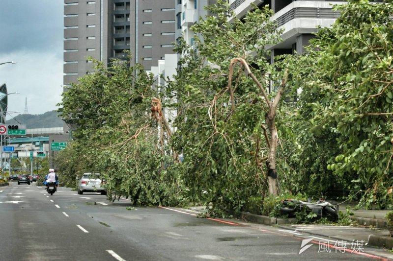 在颱風吹襲後有不少路樹應聲倒地,有質疑是樹穴太小導致,柯文哲表示,將要求公園處、工務局等局討論,並在1個月後交報告。(余志偉攝)