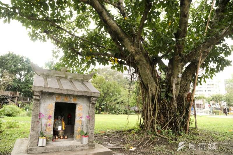 客家文化園區裡的老榕樹及土地公廟。(陳明仁攝)