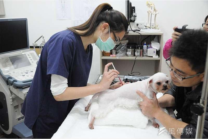 作者認為,獸醫不能用人藥是假議題。(資料照,風傳媒)