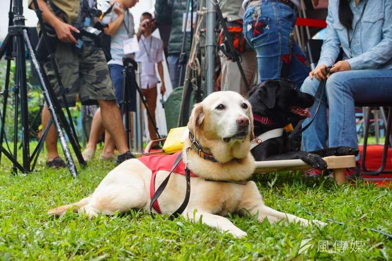 總統蔡英文出席導盲犬收養簽約儀式。(盧逸峰攝)