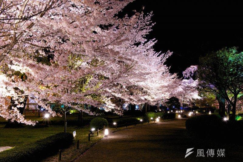 屏東春節期間有豐富的色彩,霧台鄉的櫻花正盛開,鄉公所辦「魯凱粥道」活動。(圖/Ryosuke Yagi@Flickr)