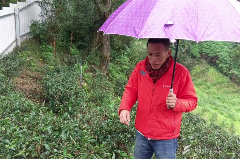 李昌峻對茶園管理也有一套自己的想法,他認為整個茶園是一個生態鏈,過度除草反而會危及茶樹生長。(陳俐穎攝)