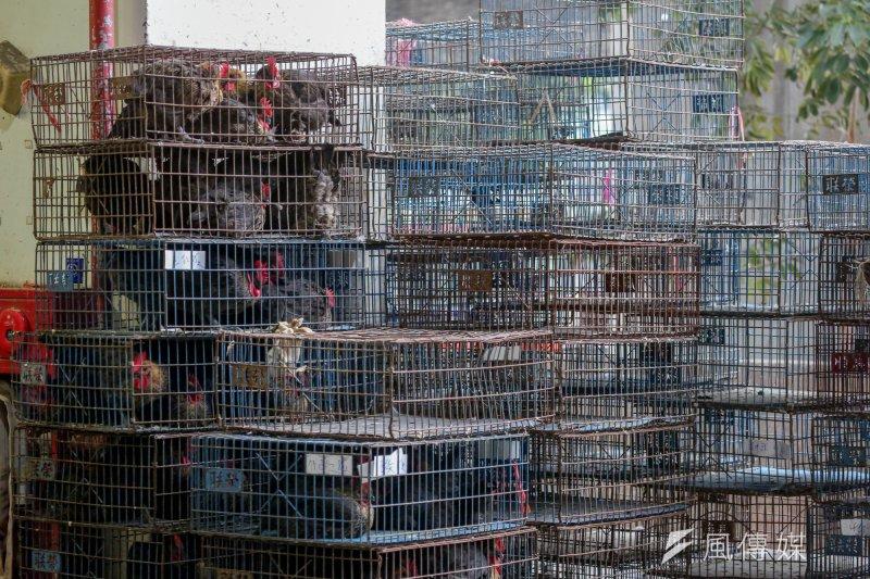 H5N6疫情明顯增溫,農委會宣布成立禽流感中央災害應變中心,全面動員進行防疫大作戰。(資料照,余志偉攝)