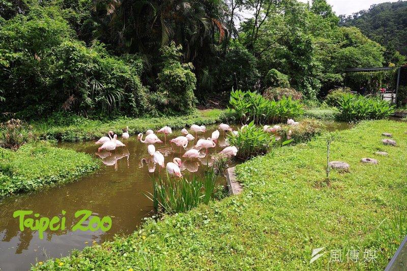 臺北市動物園為防範H5N6禽流感病毒加強防疫及宣導(資料圖,臺北市政府提供)