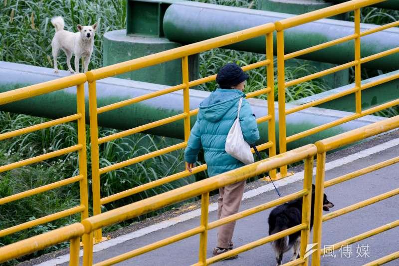 13.圖輯-流浪狗.流犬專題-景美溪畔步道上.流犬看著民眾牽著毛小孩.牠們曾經也是.(陳明仁攝)